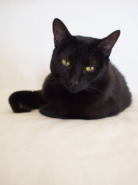 A black cat with green eyes on a white background