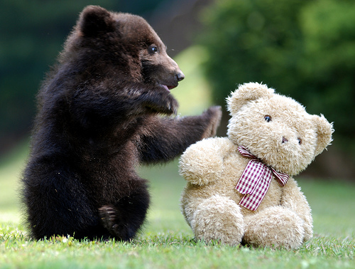 Small brown bear cub reaches for a cream colored teddy bear with arms outstretched.
