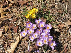 Purple and yellow flowers in the ground