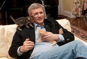 prime minister stephen harper sitting on a couch holding an orange kitten in his lap while a gray and black kitten jumps on his shoulder