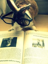 A rabbit reading a book.