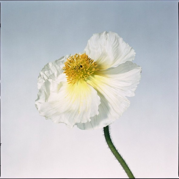 close-up photo of white flower with yellow center.