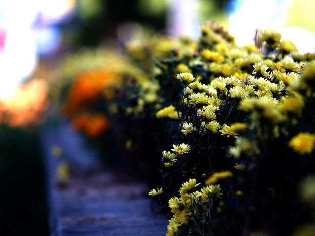 Yellow flowers sit along a blue railing.