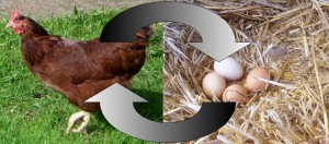 Image of chicken and eggs with arrows drawn to make a circle going back and forth between them