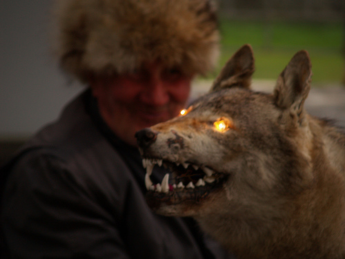 A man in the distance smirks as the lights of a stuffed wolf glow in the foreground.