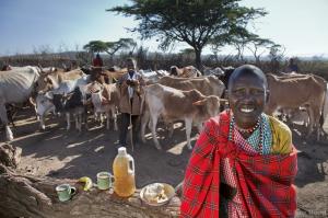 maasai herdsman with daily food
