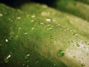 close-up of cucumber with water droplets