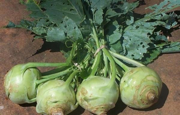 Photo via naturalhealth-solutions.net