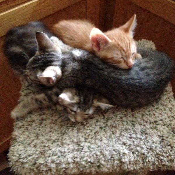 grey tiger, tabby and orange tiger piled on top of one another on top of cat house
