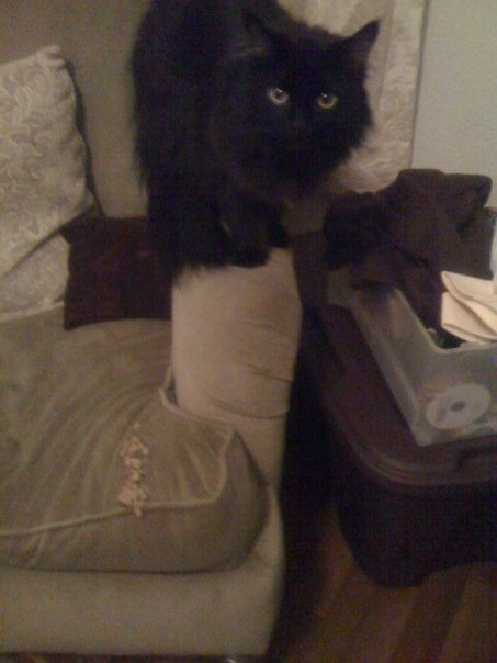 Black cat standing on arm of chair, staring at camera, while his puke sits nicely on the seat.