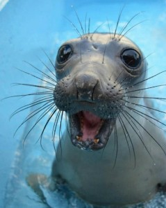 Picture of a Happy Seal