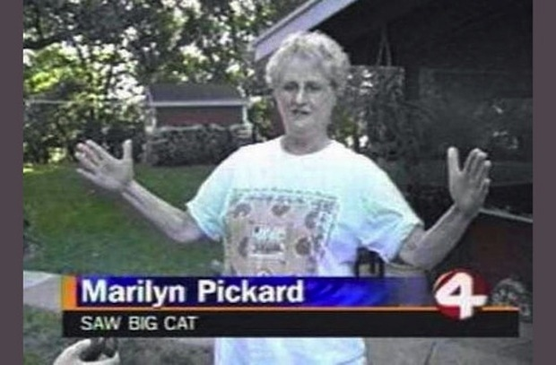 "Screencap from a news program of a woman holding her hands about 4-5 feet apart, with a caption at the bottom that reads ""Marilyn Pickard saw big cat."""