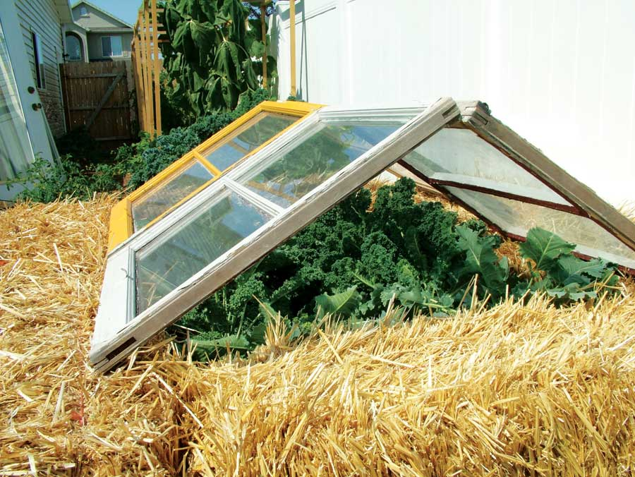"Leafy greens growing inside a square of hay bales and under windows tipped to make a triangular ""roof"""