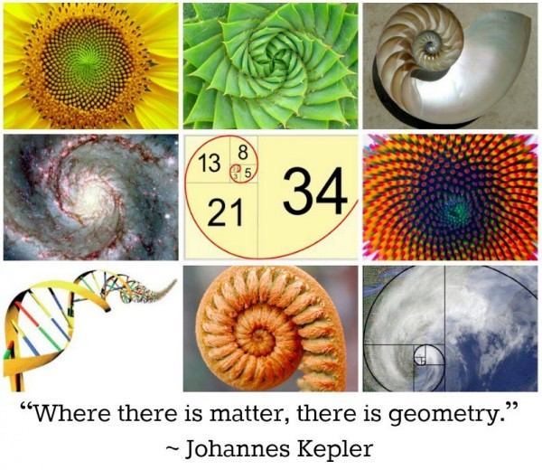 """Examples of real or apparent Fibonacci spirals - a sunflower, spiral aloe, seashell, spiral galaxy, another flower, DNA, curled fern frond, and hurricane, captioned """"Where there is matter, there is geometry"""" - Johannes Kepler"""