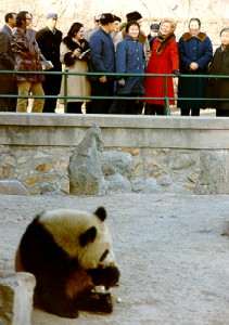 Pat Nixon and others looking at a panda at the Chinese Zoo