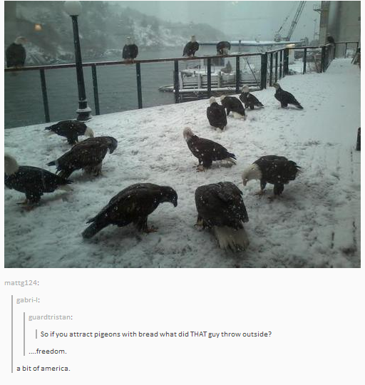 "Picture of 16 bald eagles gathered together; comment thread below reads, ""So if you attract pigeons with bread what did THAT guy throw outside?"" ""...freedom."" ""a bit of america."""