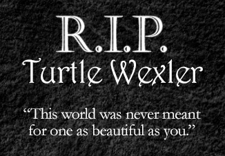 "Text reads ""R.I.P. Turtle Wexler 'This world was never meant for one as beautiful as you.'"""