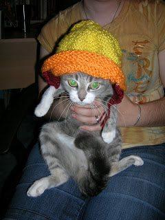 Grumpy gray cat wearing Jayne hat