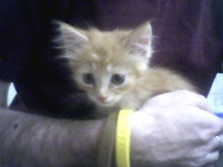 Man wearing brown and yellow wristbands, holding a ginger kitten