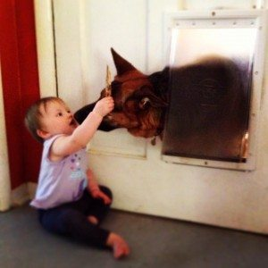 A baby pets and kisses a German Shepherd that's sticking its head through a doggy door