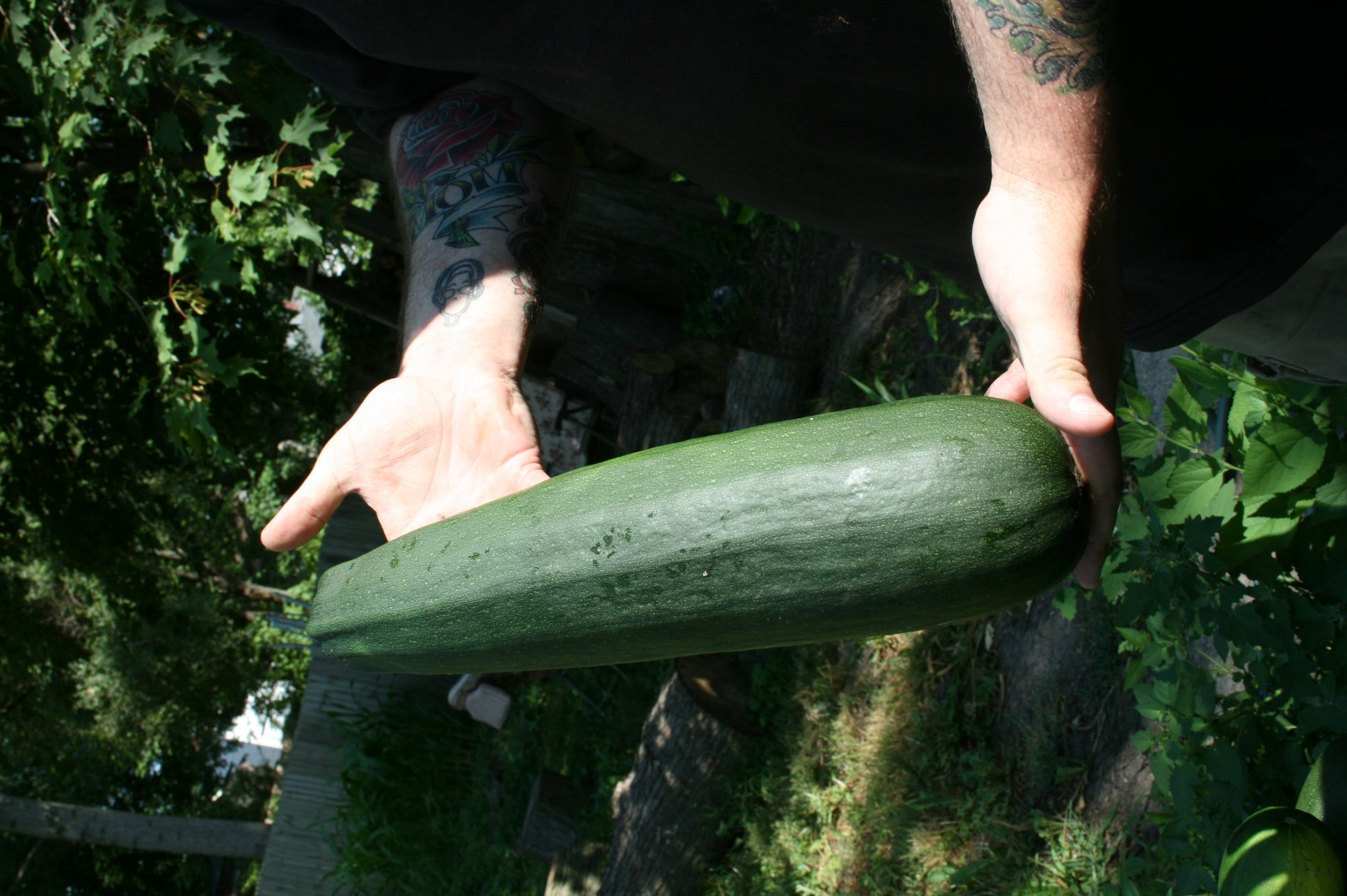 Picture of someone holding a large zucchini.