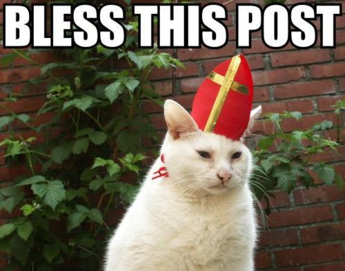 bless-this-post-pope-cat.jpg