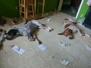 A picture of two hounds laying in some kind of self-made distruction.