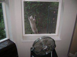 A kitten climbs the windowscreen.
