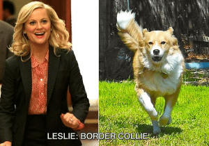An image comparing Leslie Knope to a collie.