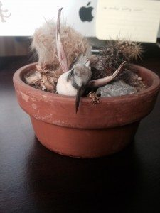 A picture of a dead cactus and somewhat creepy plastic hummingbird.