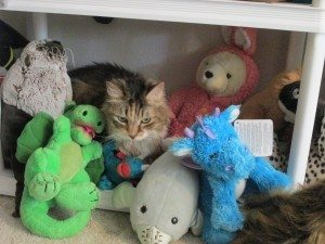 A picture of a cat hiding among a pile of toys.