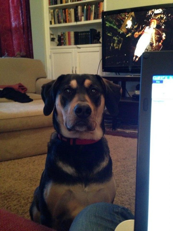[You cannot resist The Boomer Dog's Jedi mind tricks. Photo courtesy of LK Huffman.]