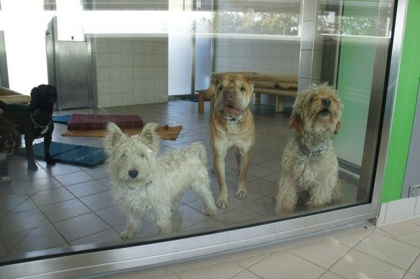 A picture of three dogs standing behind a glass door.