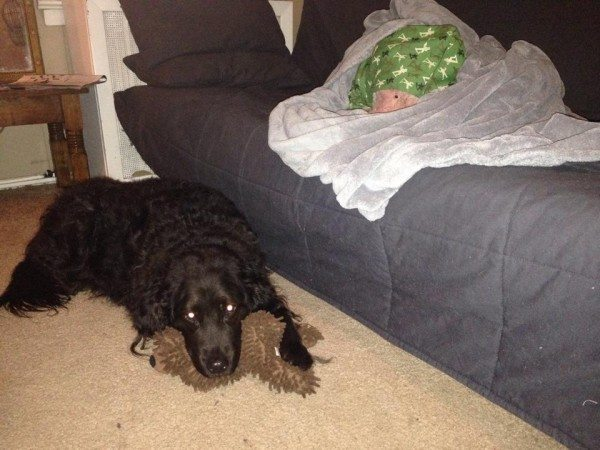 A dog sleeps on a futon and another lays with a toy on the floor.