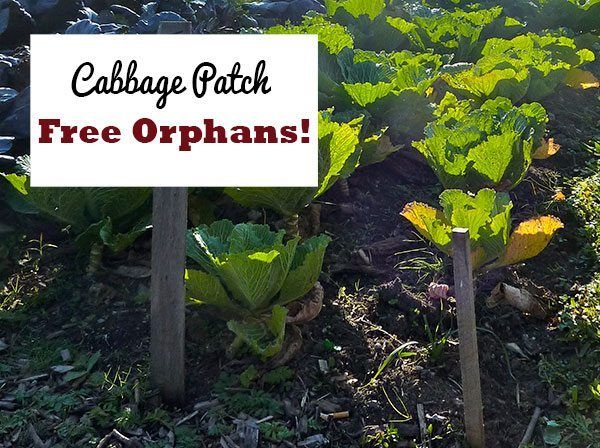 "Cabbage patch with sign that reads ""Cabbage Patch Free Orphans!"""
