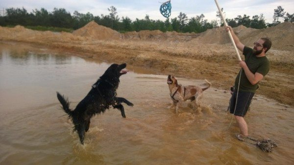 A dog jumps for a toy on the end of a flirt pole while standing in water.