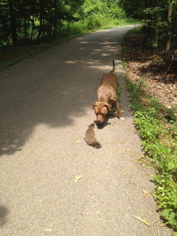 Dog and groundhog
