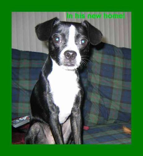 Black mixed breed dog