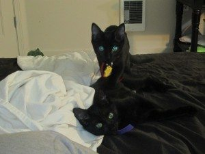 Two black kittens with yellow eyes sit on a bed.