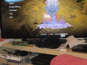 A black kitten sleeps in front of a TV