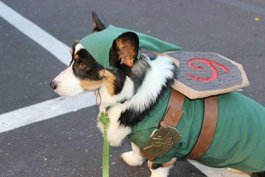 A Pembroke Welsh Corgi dressed as Link from the Legend of Zelda.