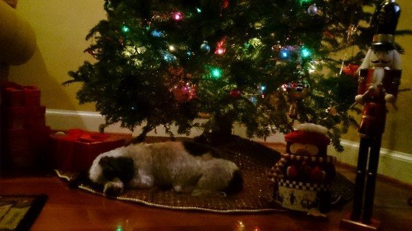 Annabelle asleep under Christmas tree