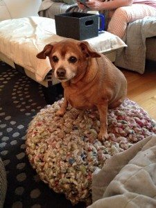 A picture of a small reddish dog seated on a knitted ottoman.