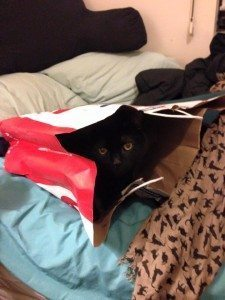 A picture of a black cat sitting inside a red and white shopping bag.