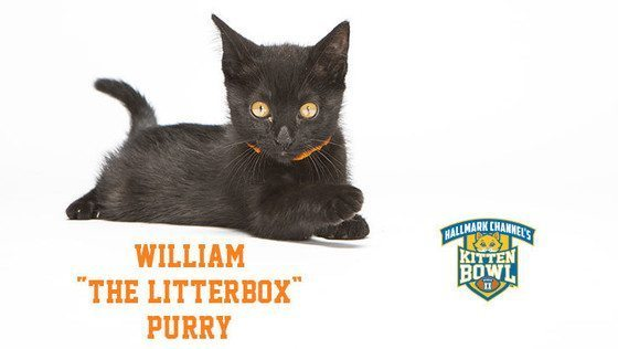 Kitten Bowl - William The Litterbox Purry