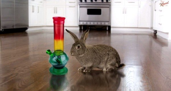 A picture of a rabbit sitting next to a bong.