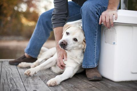 A picture of a yellow lab dog leaning against a white box and being pet by a man wearing jeans.