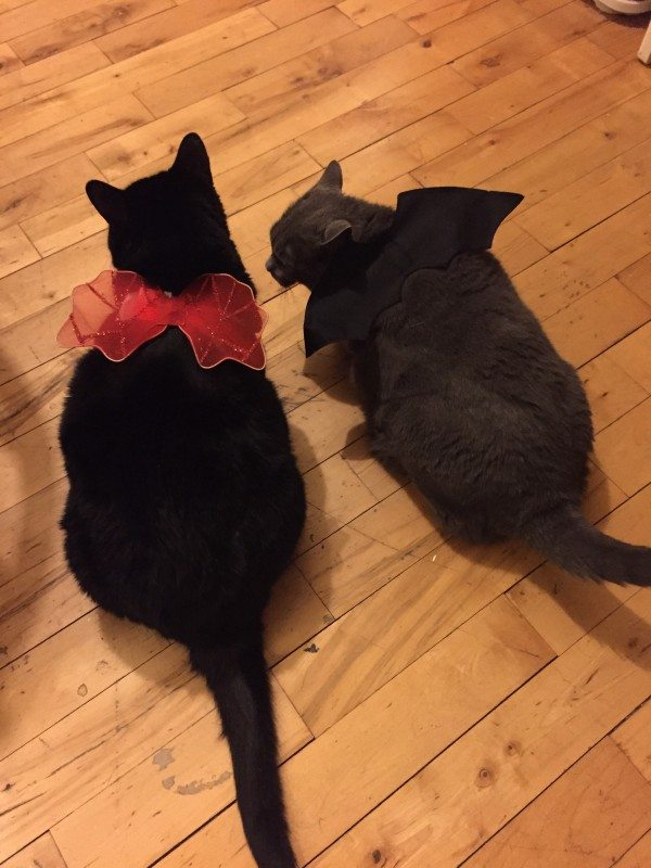 A picture of a black cat wearing red angel wings and a gray cat wearing black bat wings.
