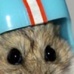 Profile picture of Hamsterpants