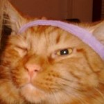 Profile picture of beaucoupcats